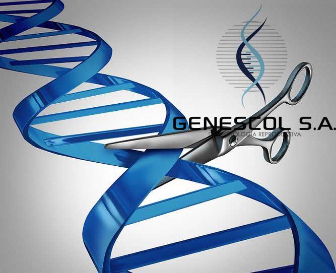 CRISPR edición genética