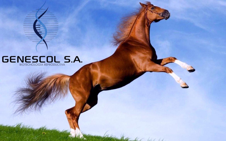 caballo-cuarto-de-milla-en-dos-patas